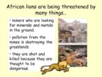Lions and Their Habitats