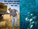 Gathering the Harvest