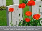 Remembrance – Story of the Poppy