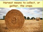 Harvest of the World