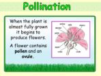 Life Cycle of a Flowering Plant
