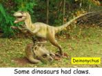 Dinosaurs – For Early Readers