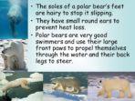Habitats – The Arctic