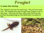 Life Cycles – Frog
