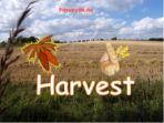 Harvest Bundle sale